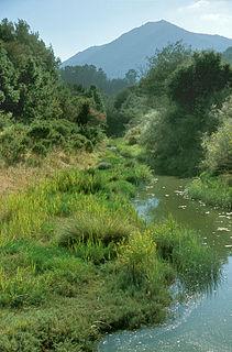 Larkspur Creek