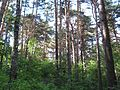 Tomsk, Tomsk Oblast, Russia - panoramio - Figure (12).jpg