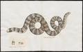 Tortrix scytale - 1700-1880 - Print - Iconographia Zoologica - Special Collections University of Amsterdam - UBA01 IZ11400045.tif