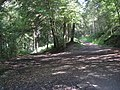 Track Junction above Rivelin Dams - geograph.org.uk - 1438468.jpg