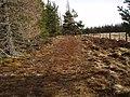 Track at edge of Cragganmore Wood - geograph.org.uk - 1188405.jpg