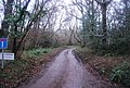 Track to Quantock Moor Farm - geograph.org.uk - 1657272.jpg