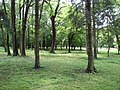 Trebisov Andrassyovsky kastiel (park)-16.JPG