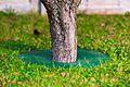 TreeGuard.jpg