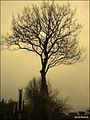 Tree (4542677989).jpg