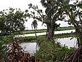 Tree at riverside.jpg