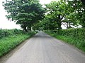 Tree lined road - geograph.org.uk - 811884.jpg
