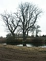Trees and pond, Manor Farm, Arminghall - geograph.org.uk - 117936.jpg