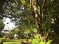 Trees live (27594227309).jpg