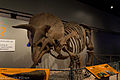 Triceratops Skeleton - National Museum of Natural History (14611729991).jpg