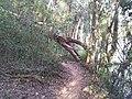 Trilha beirando rio Jaguari - panoramio (2).jpg