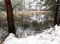 Trunnenmoor 3 See.jpg