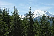 Tsuga heterophylla perto de Rainier.jpg
