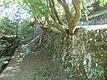 Tsuwano Castle 10 Koshi-guruwa.JPG