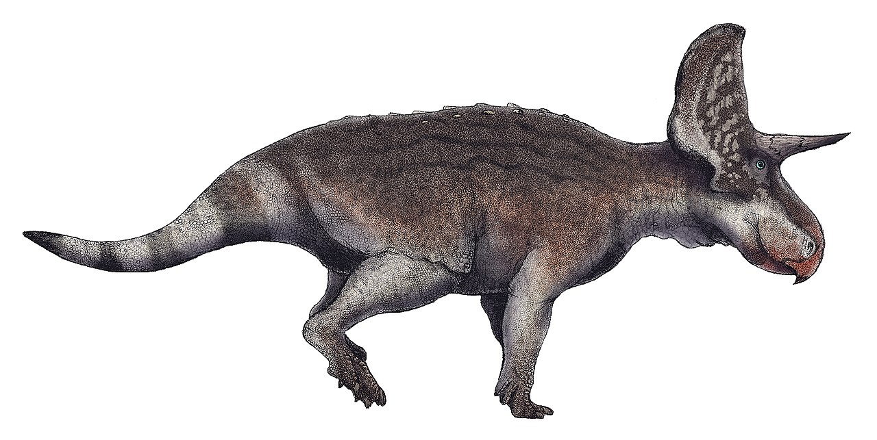 Turanoceratops tardabilis life restoration.jpg