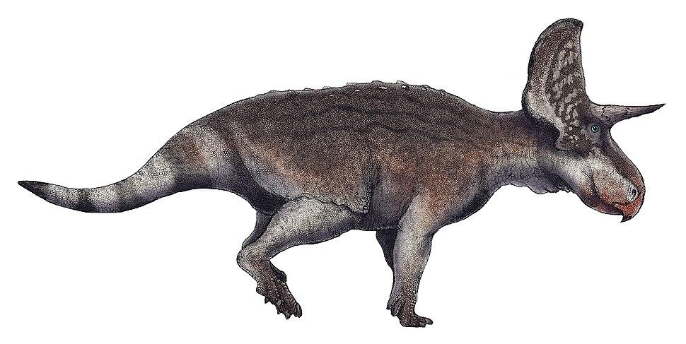 Turanoceratops tardabilis life restoration