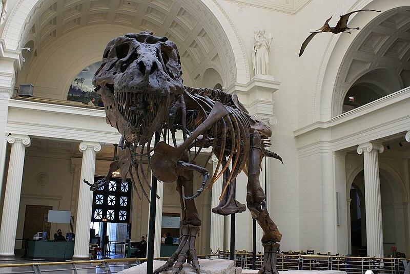 File:Tyrannosaurus rex fossil -Chicago Field Museum-6.jpg