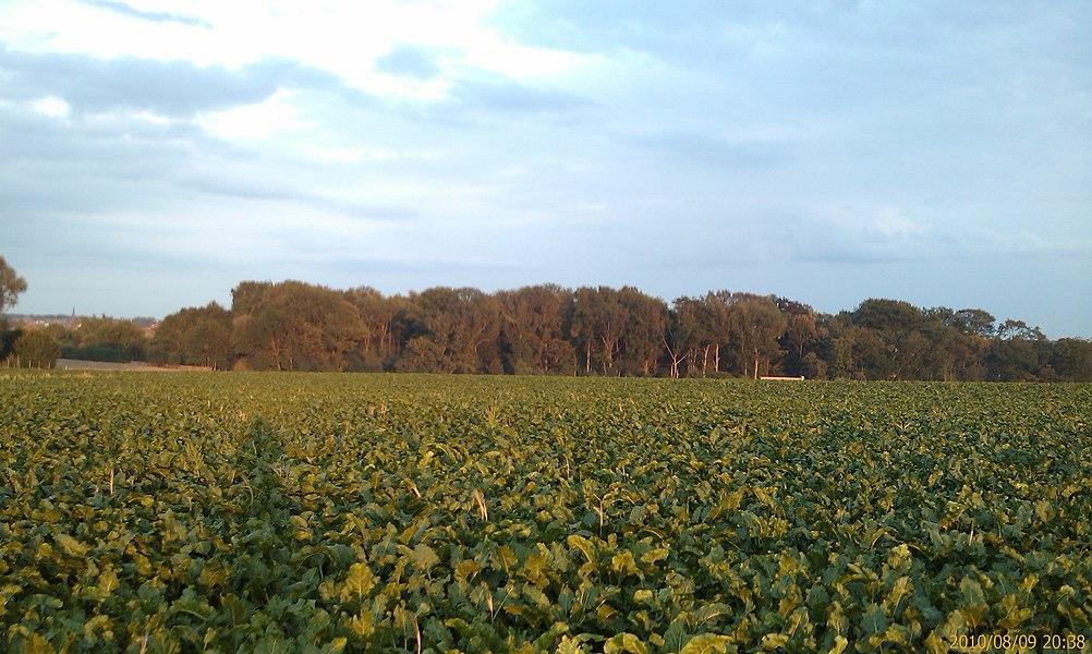 Un champs bien vert