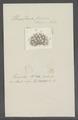 Urceolaria fraxinina - - Print - Iconographia Zoologica - Special Collections University of Amsterdam - UBAINV0274 113 21 0005.tif