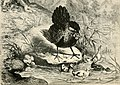 Ursula at home (1897) (14566054378).jpg