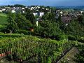 Uster - Nossikon-Riedikon - Schloss IMG 3525.jpg