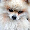 Världens gulligaste hund?.jpg