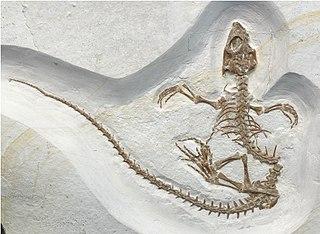 Rhynchocephalia Order of reptiles
