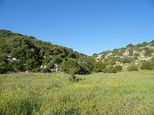 Judea - Mediterranean oak and terebinth woodland in the Valley of Elah, southwestern Judea.