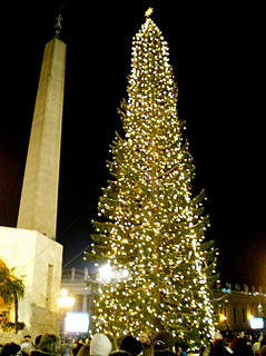 Vatican Christmas Tree public Christmas tree in the Vatican City