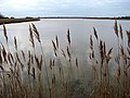 View across Horsey Mere - geograph.org.uk - 1103435.jpg