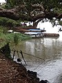 View from Shore of Lake Tana - Bahir Dar - Ethiopia - 02 (8677069911).jpg