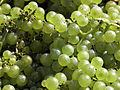 Vigne Chardonnay (Festigny) Cl.J.Weber03 (23050627663).jpg