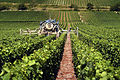 Vignoble Champagne Cl j Weber08 (23569090142).jpg