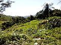 Vila Tabocas - panoramio (1).jpg