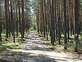 WILCZE ŁUGI wiosna 13 - panoramio.jpg