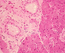 importance of epithelial tissue