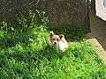 Wachhund (13984711376).jpg