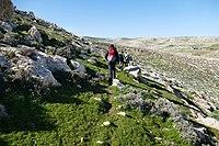 Wadi-Makukh-524.jpg