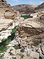 Wadi Ayun (Dhofar, Oman) (10.3897-zookeys.679.11967) Figure 18.jpg