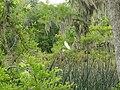 Wakulla-springs 2009-05-04T19 19 39.jpg