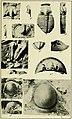 Walcott Cambrian Geology and Paleontology II plate 17.jpg