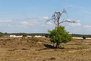 Wandeling over het Hulshorsterzand-Hulshorsterheide 004.jpg