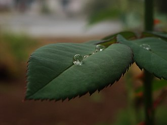 Rain - A raindrop on a leaf