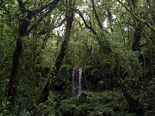 Water falls in the rainforest near Mt Kilimanjaro.JPG