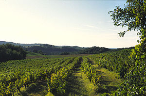 Len de l'El - Len de l'El is found almost exclusively in the Gaillac region (pictured)