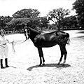 Werner Haberkorn - Mulher e cavalo posando para foto.jpg