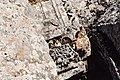 West Church, Me'ez (ماعز), Syria - Fragment from southwest portal - PHBZ024 2016 5493 - Dumbarton Oaks.jpg