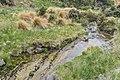 Weydon Burn in Burwood Bush Scientific Reserve 02.jpg