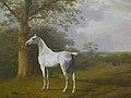 White Horse in Pasture.jpg