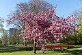 Wilhelminapark, Breda P1360758.jpg